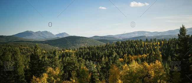 Colorado mountain forest in the fall