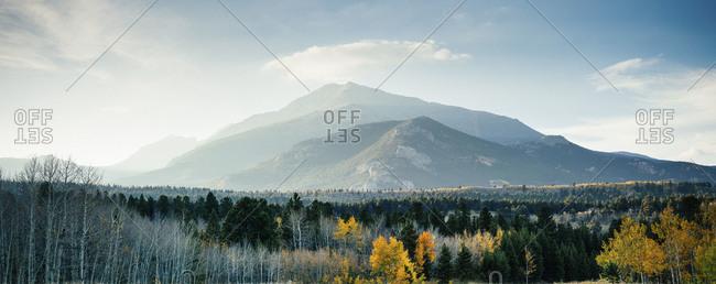 Colorado mountain forest in autumn