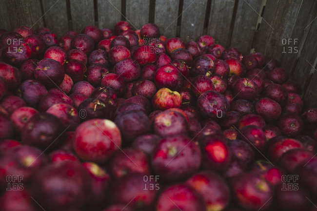 A crate full of apples