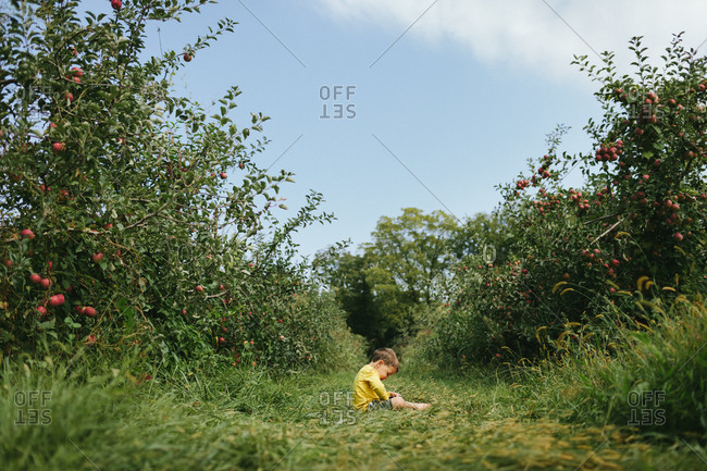 A boy sits in the middle of an apple orchard