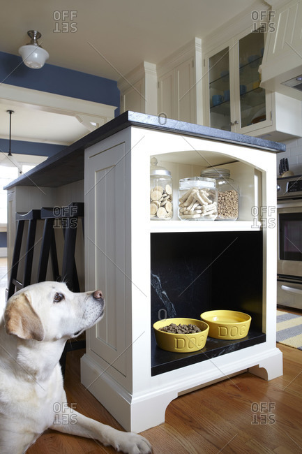 Dog and shelves in kitchen