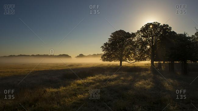 Sunrise over a field of fog