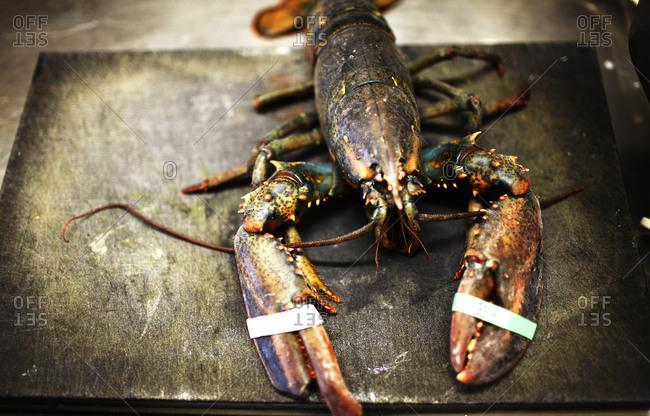 Raw lobster on cutting board