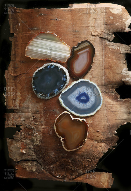 Geodes displayed on a piece of bark