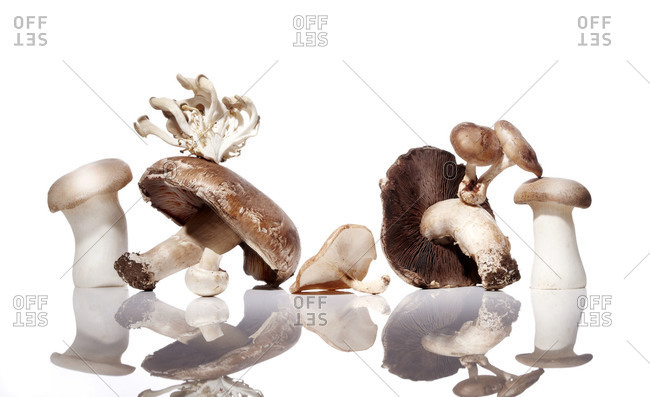 Mushrooms on a shiny surface