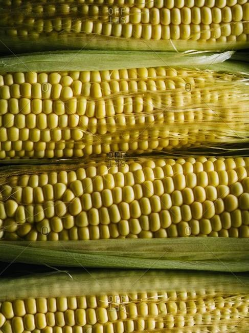 Close up of fresh husked yellow corns