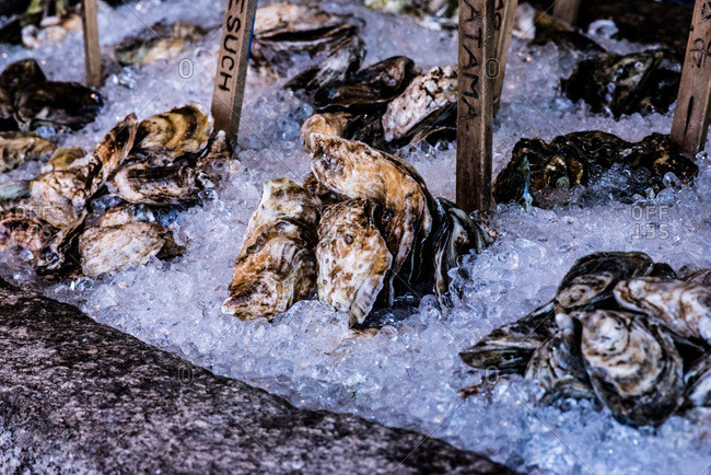 Labeled oysters in ice