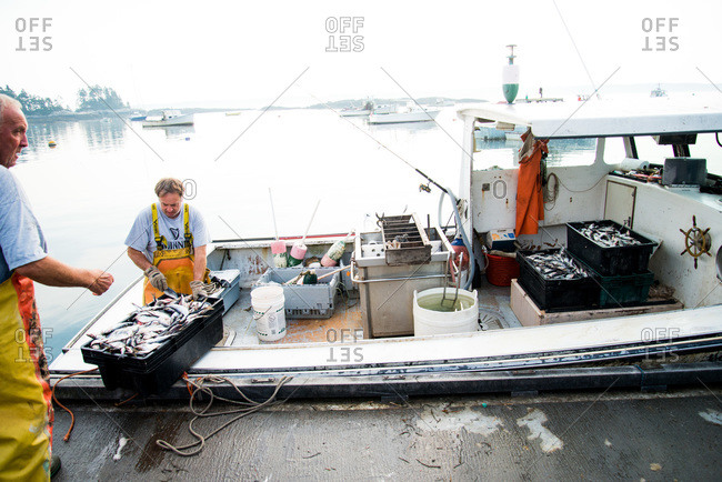 Maine, USA -  August 2013: Fisherman arranging the daily catch at a dock