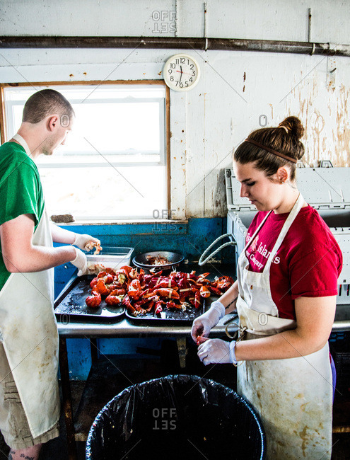 Maine, USA -  August 2013: Chefs preparing lobsters in a kitchen