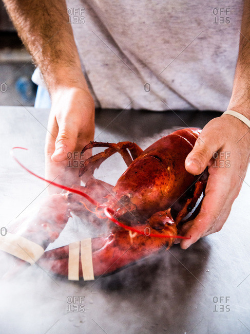Man preparing a steaming lobsters on a countertop