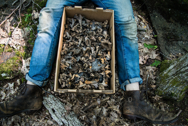 Man sitting on the ground with a crate of black trumpet mushrooms