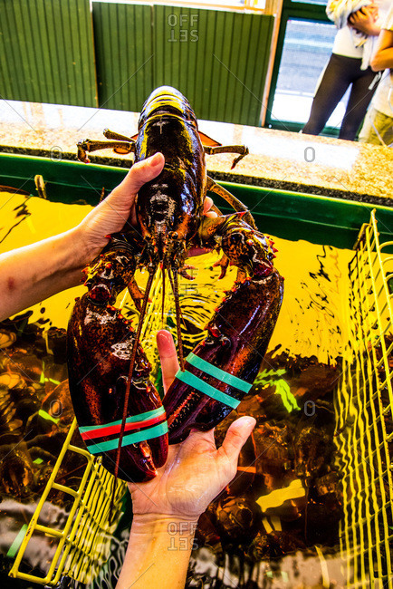 Person holding a fresh lobster