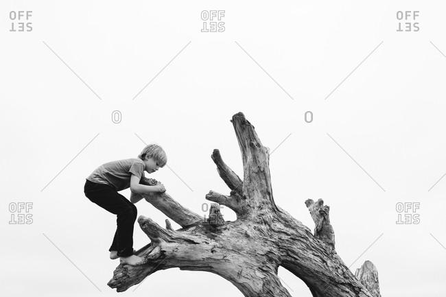 Boy climbing a dead tree