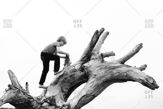 Boy climbs a dead tree