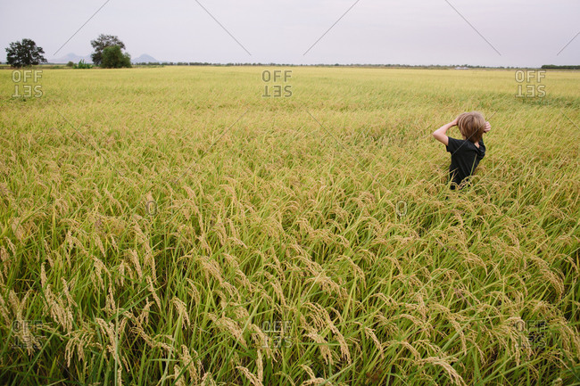 Boy walking through vast wheat field