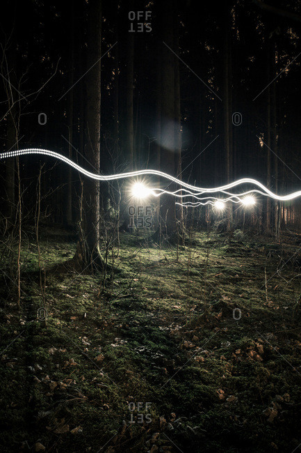 Light trails in forest