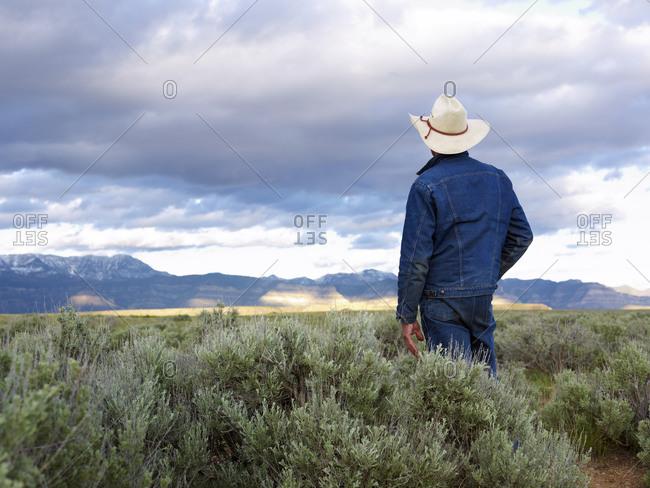 Rear view of man standing in desert landscape