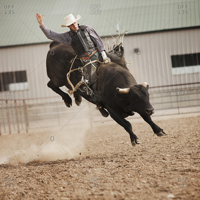 Bull rider during rodeo