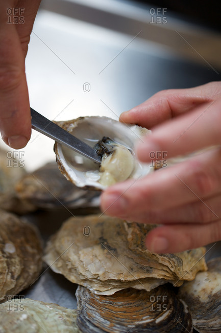 Chef opening fresh oysters