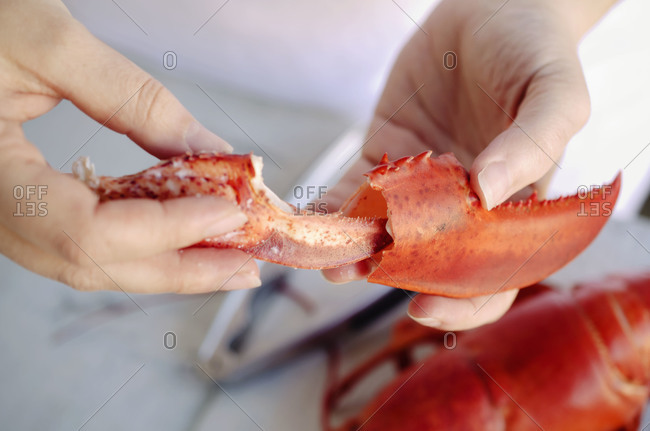Close up of chef extracting meat from a lobster claw