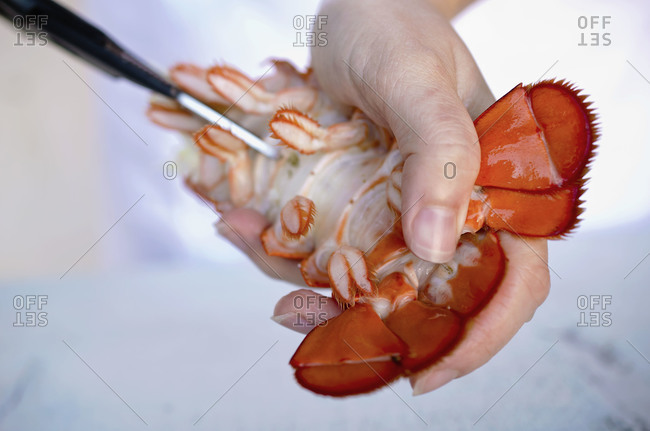 Close up of chef extracting meat from a lobster tail