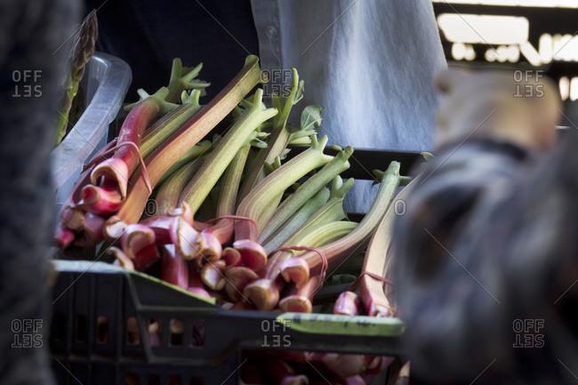 Basket of rhubarb at local farmers' market