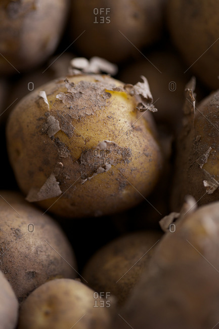 Fresh new potatoes with muddy peel