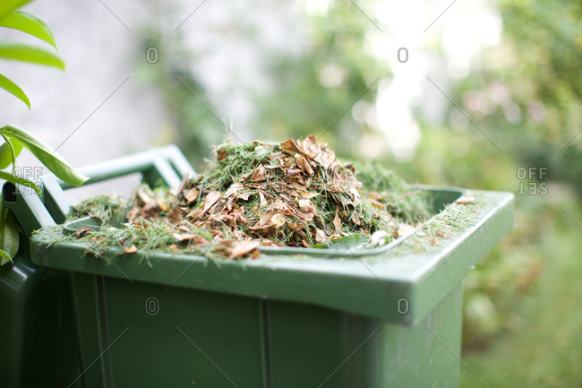 Garden waste in recycle bin