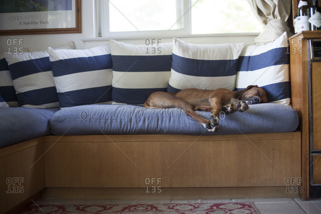 A dog sleeping on a couch