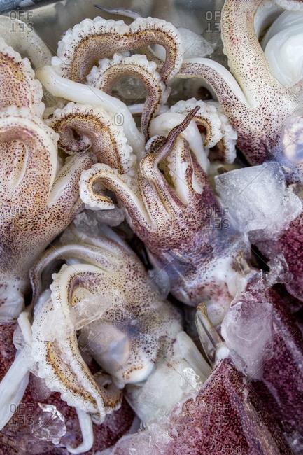 Pile of raw squid up close