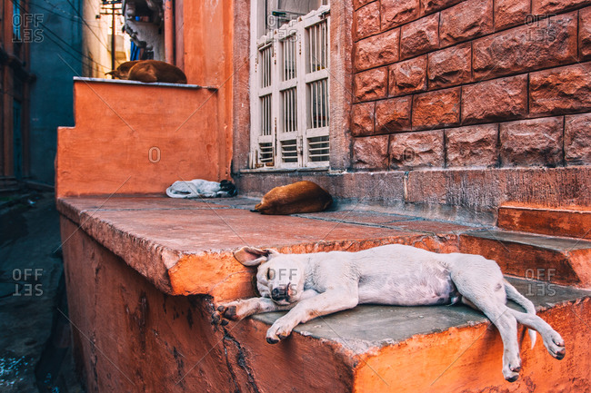Dogs sleeping in the streets of Jodhpur