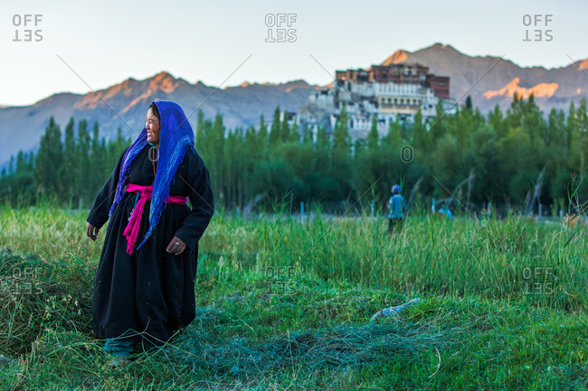 Thiksey, Ladakh, India - August 30, 2010: Ladakhi lady looks at her right while working on her field