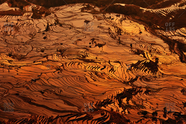 Terraced hillsides, China