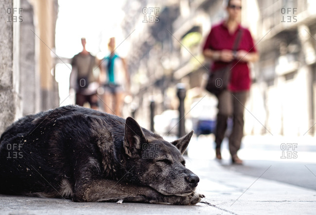 Dog sleeping on the street, Sicily, Italy