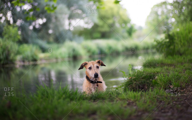 Small dog sitting on a riverbank