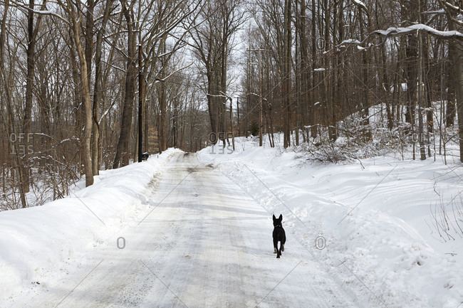 A dog runs down a snowy road