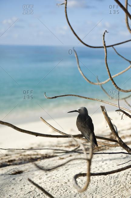 A bird on a branch on Seychelles island beach