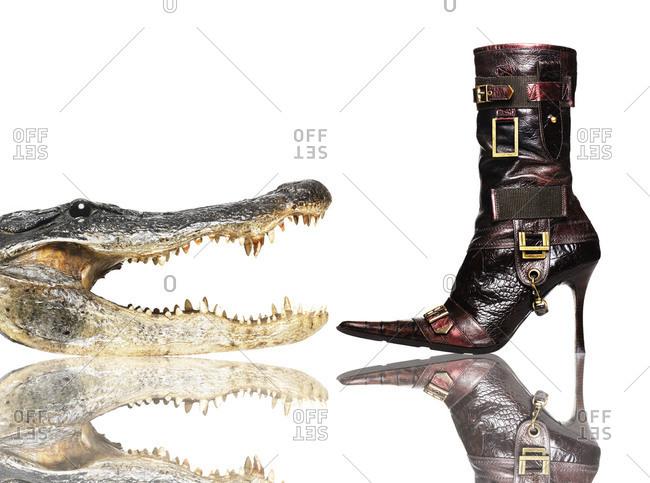 Alligator head and alligator boot
