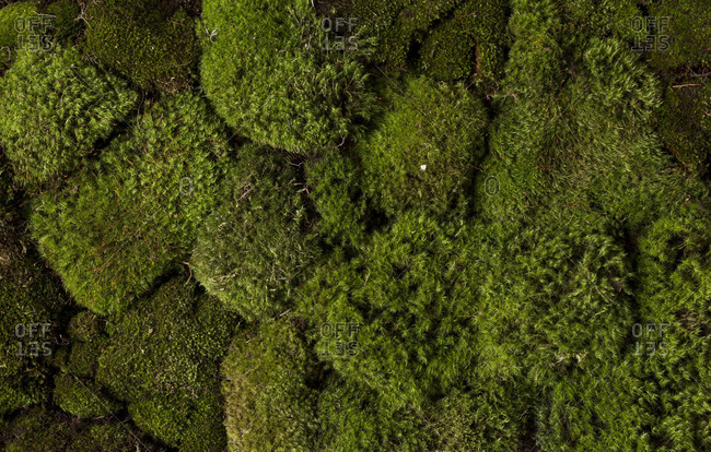 Close up of green mosses