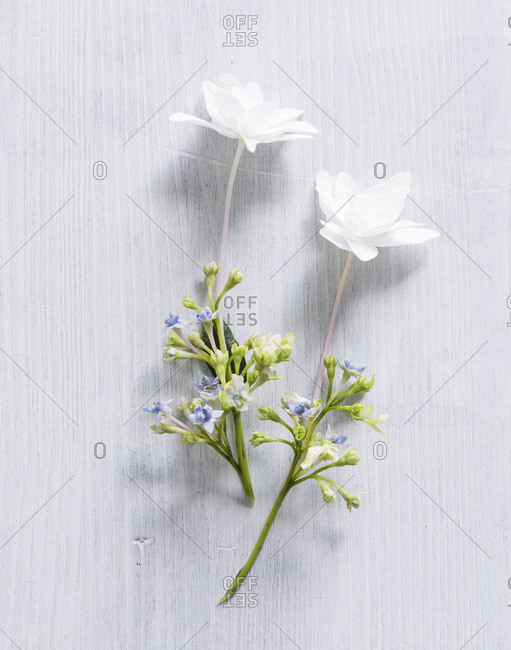 Studio shot of edible white flowers