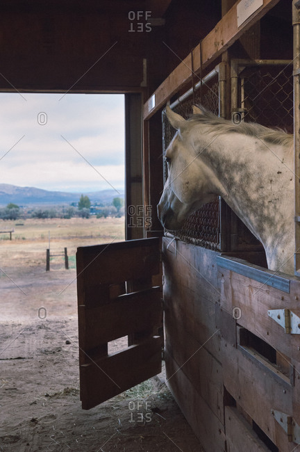 A horse peeks his head out of his stall in rural Nevada, USA