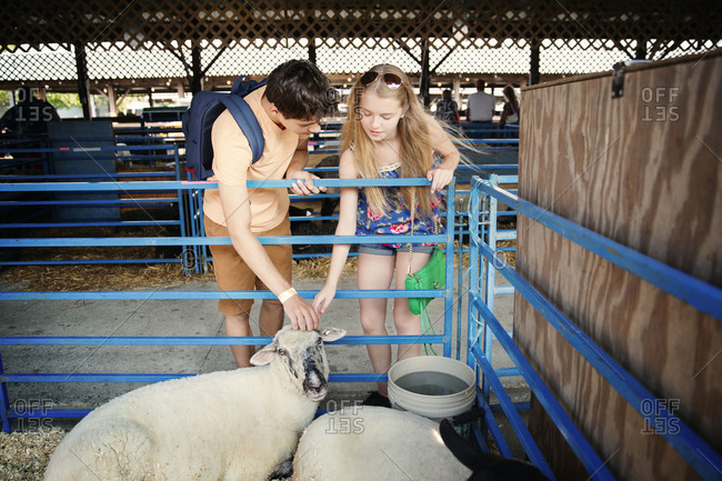 Teenage couple petting a sheep at a country agricultural show or county fair