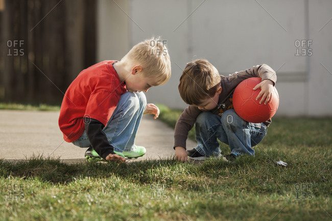 Boys investigating worms in the grass of the backyard