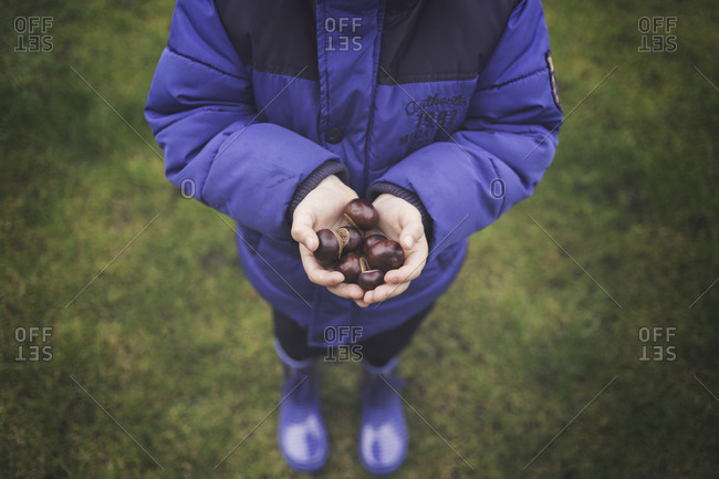 Young boy holding a handful of buckeyes