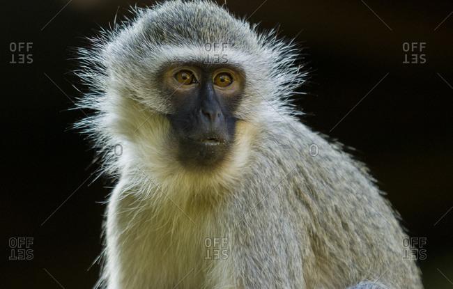 A monkey sits still