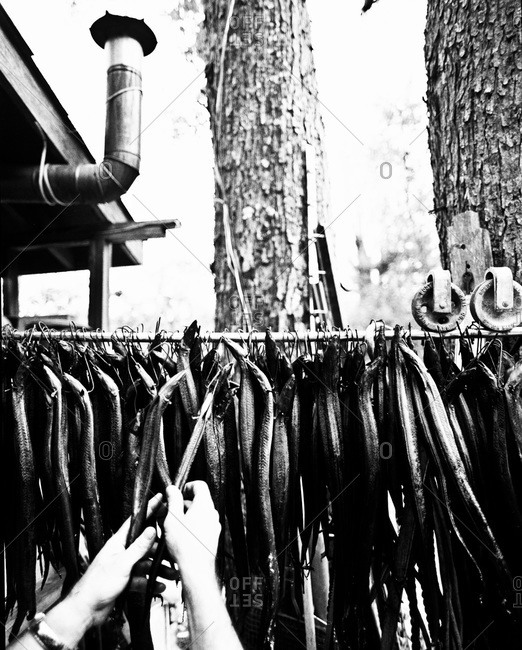 Person hanging apple wood smoked eels