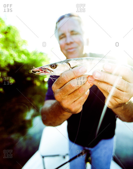 Key West, Florida - February 19, 2012: Baby barracuda being held by fishing guide Jeffrey Cardenas