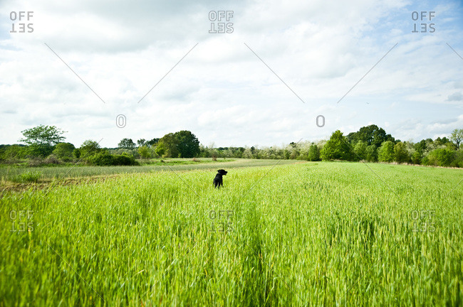 Dog standing on meadow