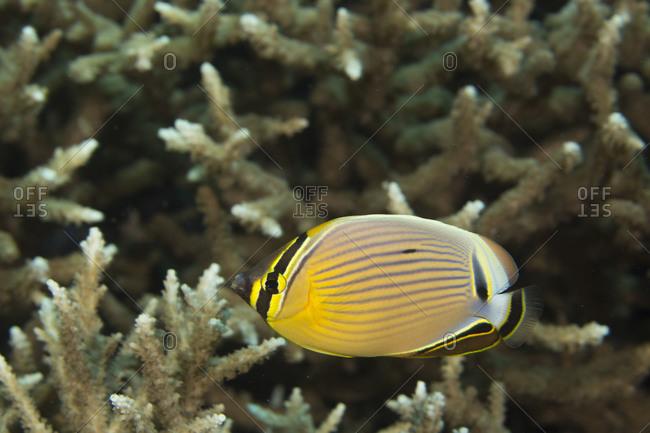 Coral Sea  Wikipedia