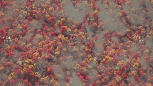 Aerial of autumn forest in the mist